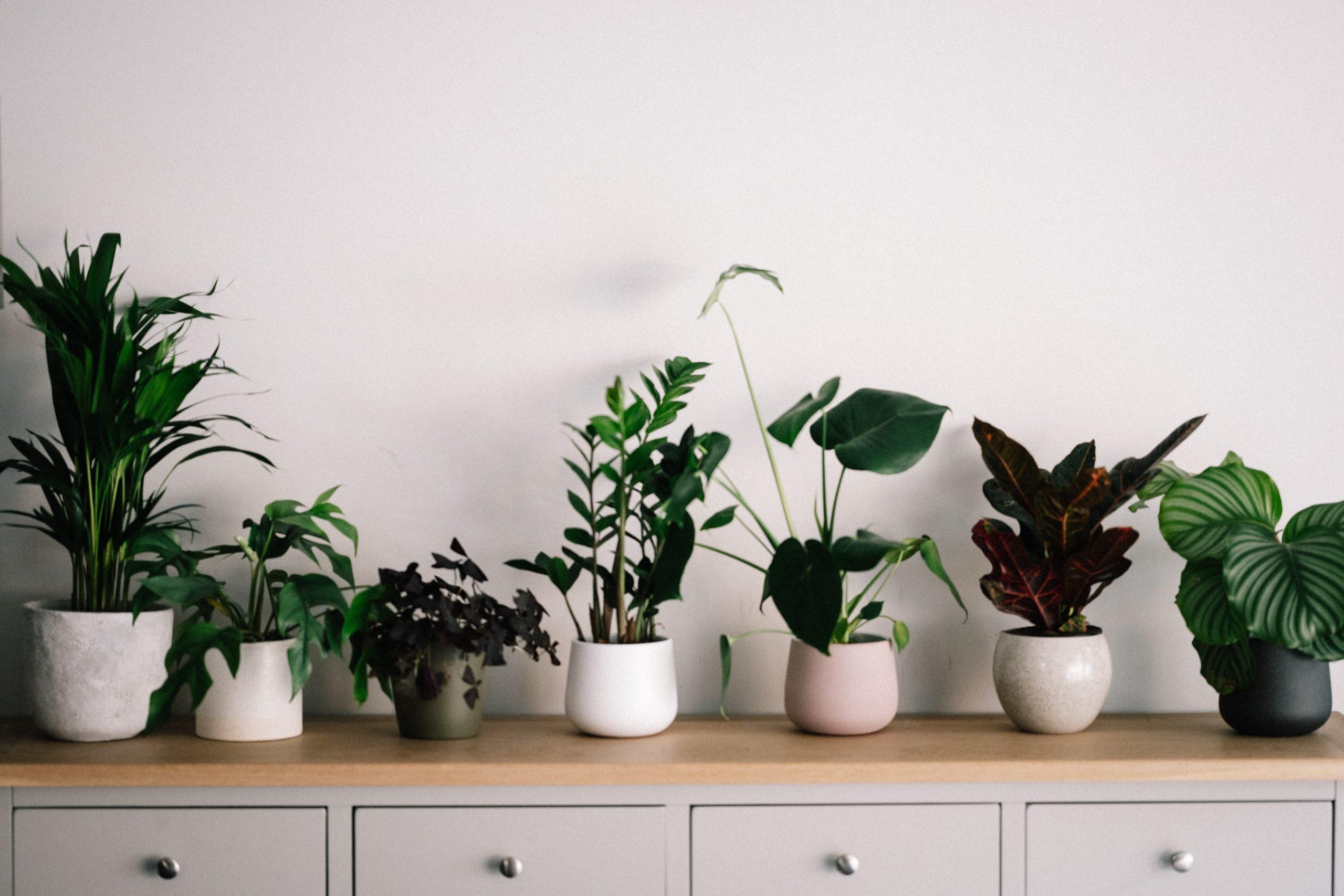Kamerplanten voordelen binnenplanten