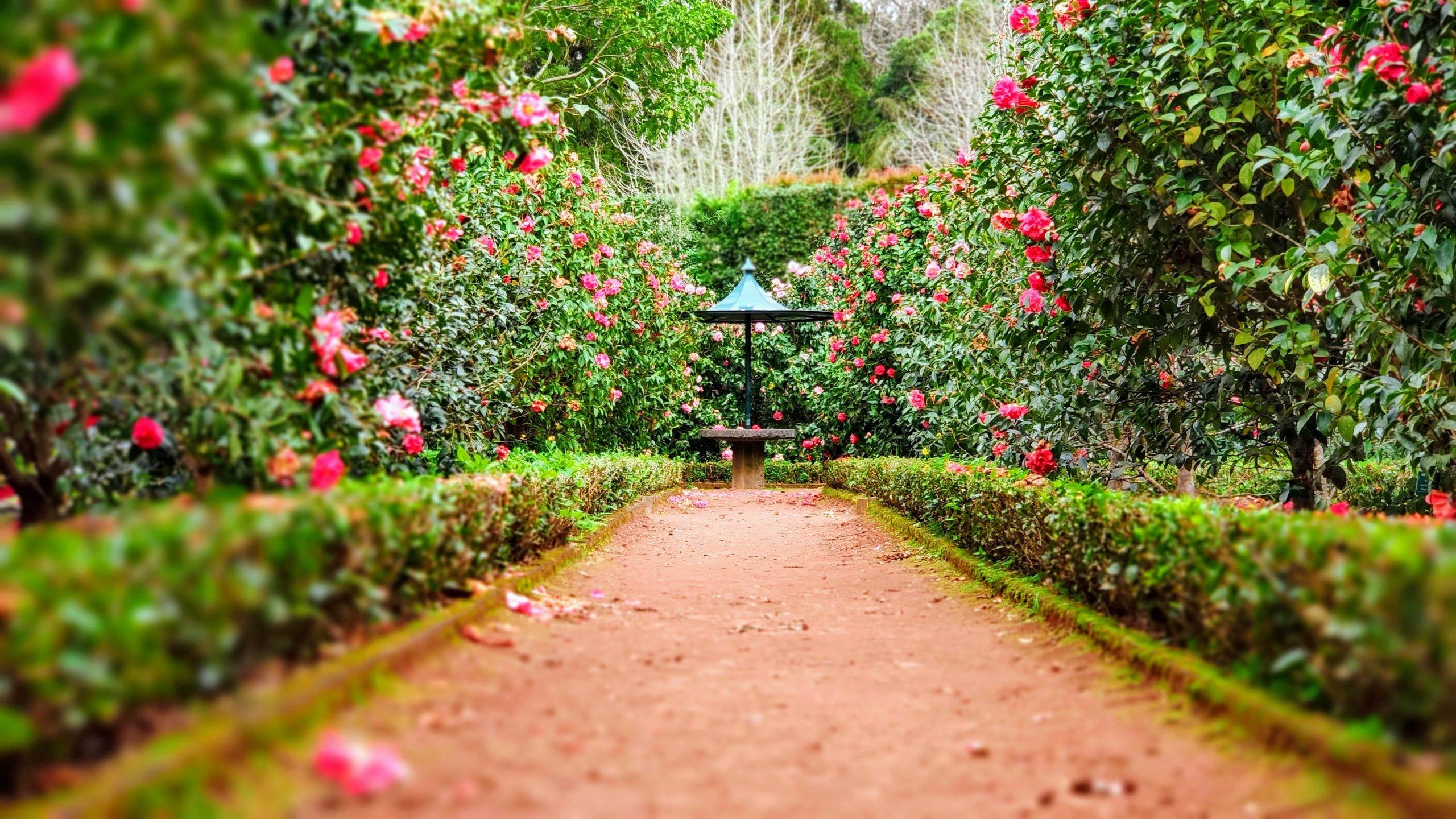 Tuintrends 2021 de tuin van 2021