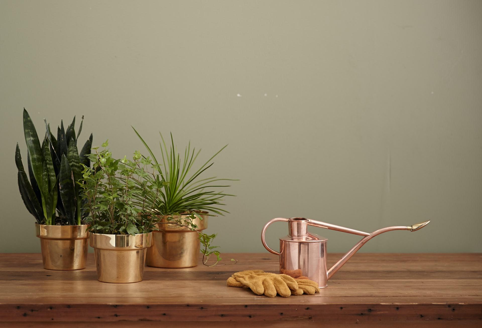 Planten water geven tijdens je vakantie - watergeefsysteem planten zelf maken